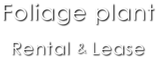 Foliage plant Rental&Lease